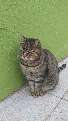 La Palma Cat